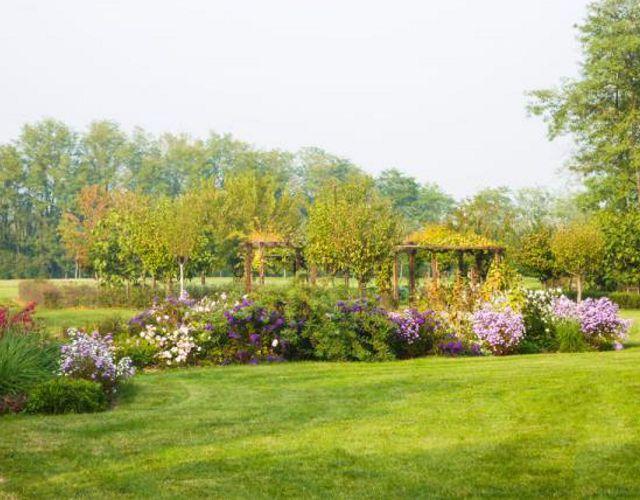 Offerta vivaio fiori e piante - Promozione piante per interni ed esterni - Bearesi Giardini