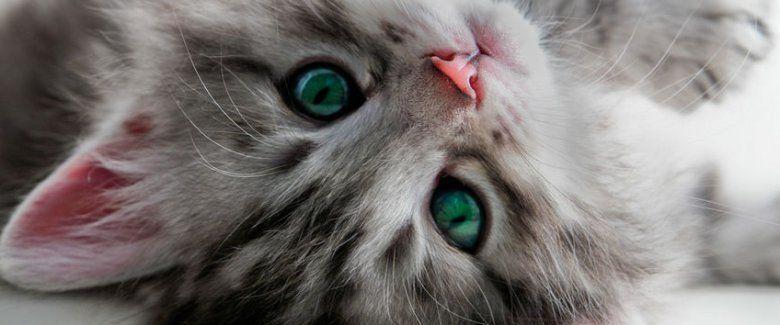 offerta ambulatorio veterinario Chirurgia diagnostica - occasione terapia intensiva animali