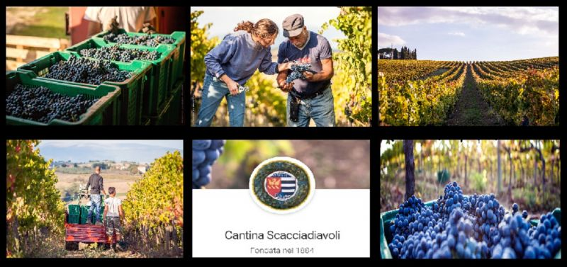 AGRICULTURAL COMPANY SCACIADIAVOLI - OFFER SALE PRODUCTION ITALIAN WINE UMBRIA MONTEFALCO
