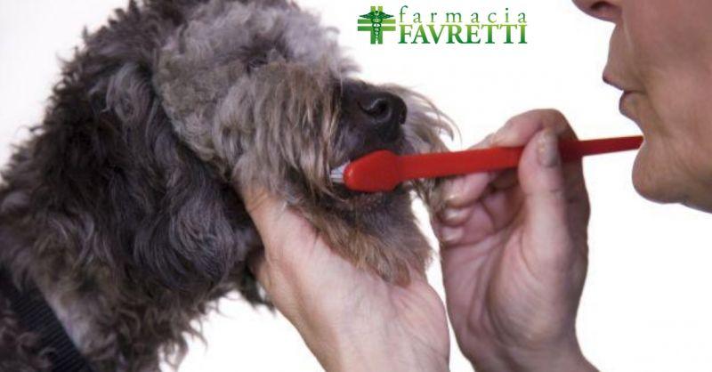 Farmacia offerta prodotti veterinari -Occasione antiparassitari e medicinali per animali Agordo